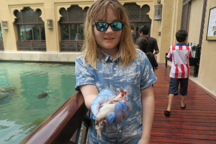 turtle feeding at madinat jumeirah